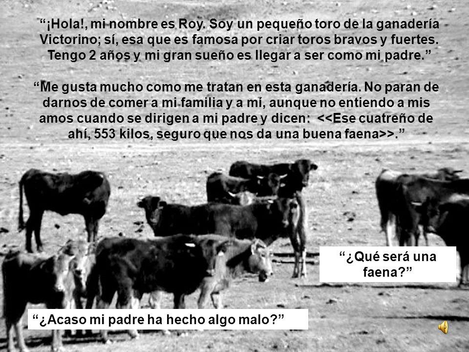 ¡Hola!, mi nombre es Roy. Soy un pequeño toro de la ganadería Victorino; sí, esa que es famosa por criar toros bravos y fuertes. Tengo 2 años y mi gra