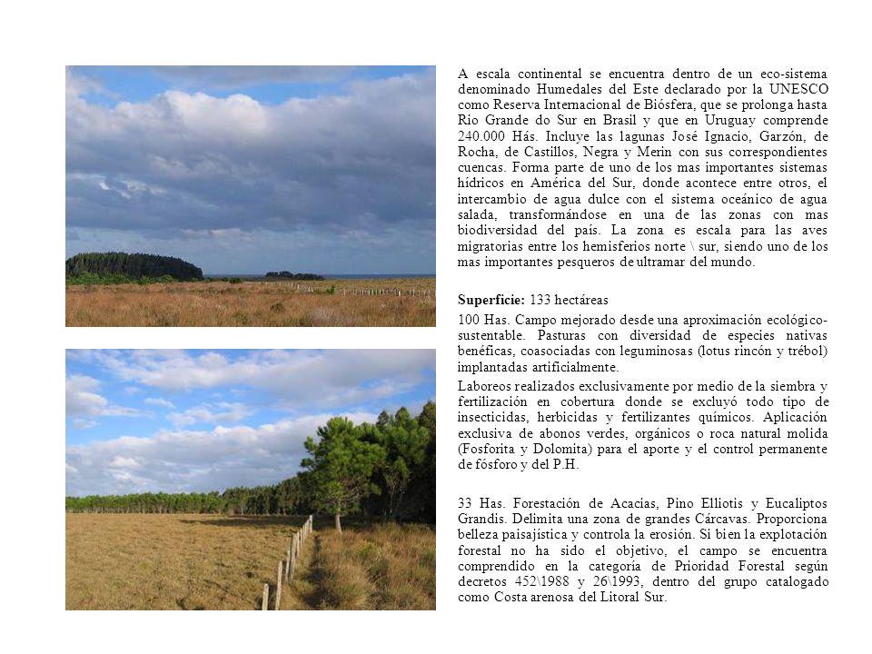 A escala continental se encuentra dentro de un eco-sistema denominado Humedales del Este declarado por la UNESCO como Reserva Internacional de Biósfer