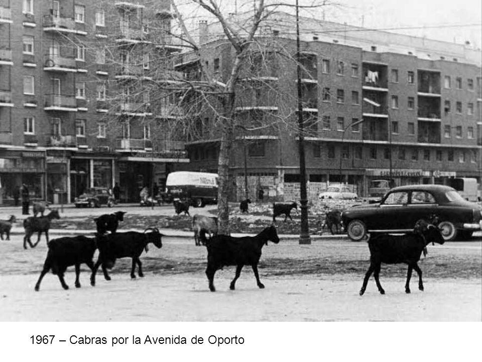 1967 – Cabras por la Avenida de Oporto