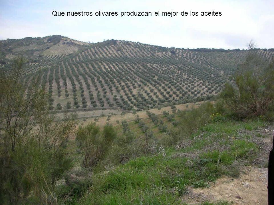 Que nuestros olivares produzcan el mejor de los aceites