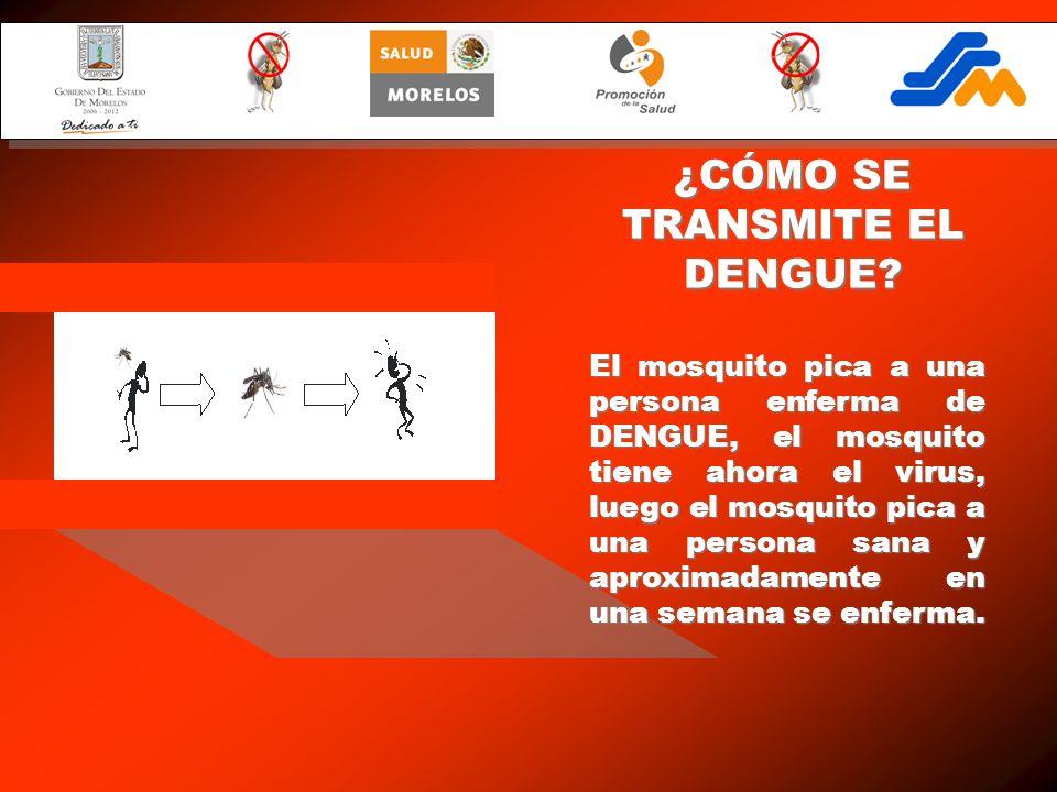 El mosquito pica a una persona enferma de DENGUE, el mosquito tiene ahora el virus, luego el mosquito pica a una persona sana y aproximadamente en una