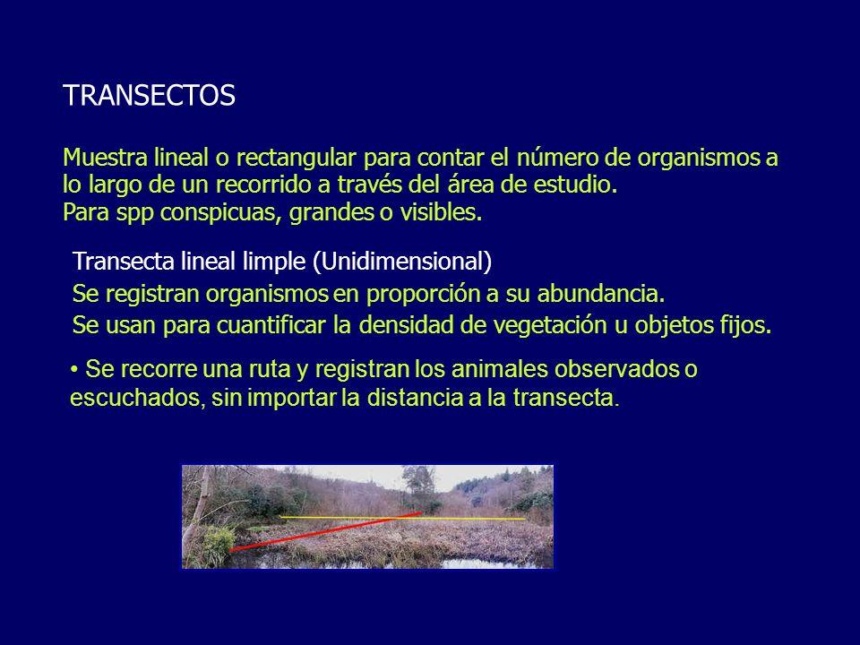 TRANSECTOS Muestra lineal o rectangular para contar el número de organismos a lo largo de un recorrido a través del área de estudio. Para spp conspicu