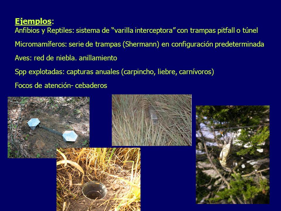 Ejemplos: Anfibios y Reptiles: sistema de varilla interceptora con trampas pitfall o túnel Micromamíferos: serie de trampas (Shermann) en configuració