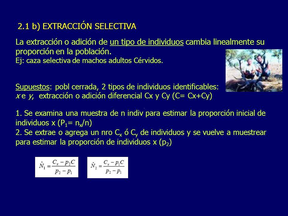 2.1 b) EXTRACCIÓN SELECTIVA La extracción o adición de un tipo de individuos cambia linealmente su proporción en la población. Ej: caza selectiva de m