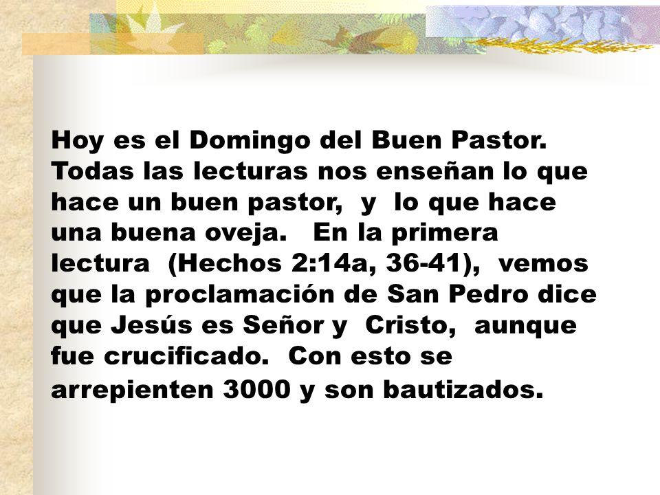 Hoy es el Domingo del Buen Pastor.