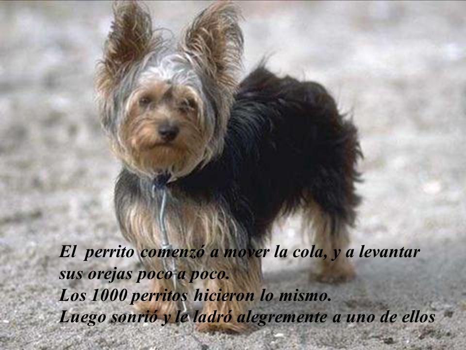 El perrito se quedó sorprendido al ver que los 1000 perritos también le sonreían y ladraban alegremente con el !