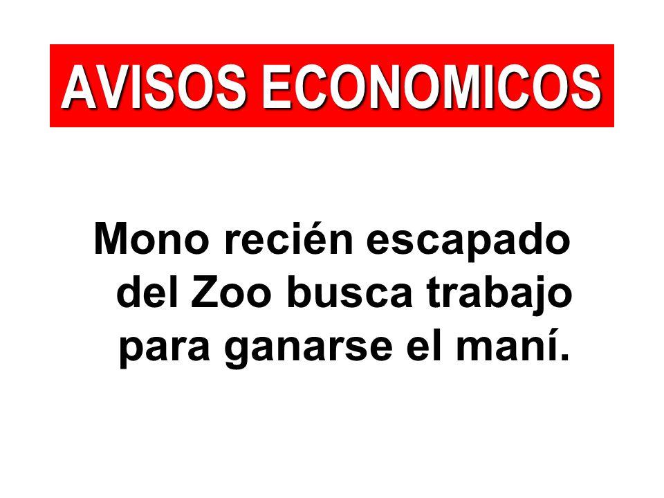 Mono recién escapado del Zoo busca trabajo para ganarse el maní. AVISOS ECONOMICOS