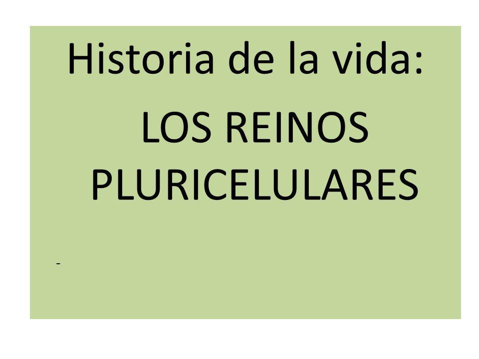 Historiade la vida: Los reinos pluricelulares Historia de la vida: LOS REINOS PLURICELULARES