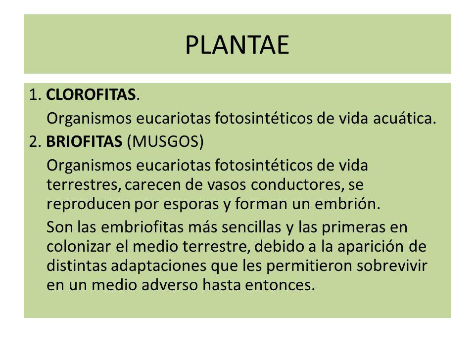 Fungi: QUITRIDIOMICOTES; ZIGOMICOTES; ASCOMICOTES; BASIDIOMICOTES.