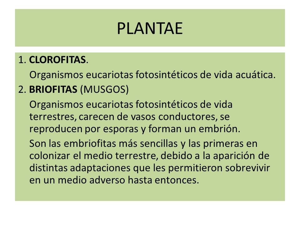 PLANTAE 1. CLOROFITAS. Organismos eucariotas fotosintéticos de vida acuática. 2. BRIOFITAS (MUSGOS) Organismos eucariotas fotosintéticos de vida terre