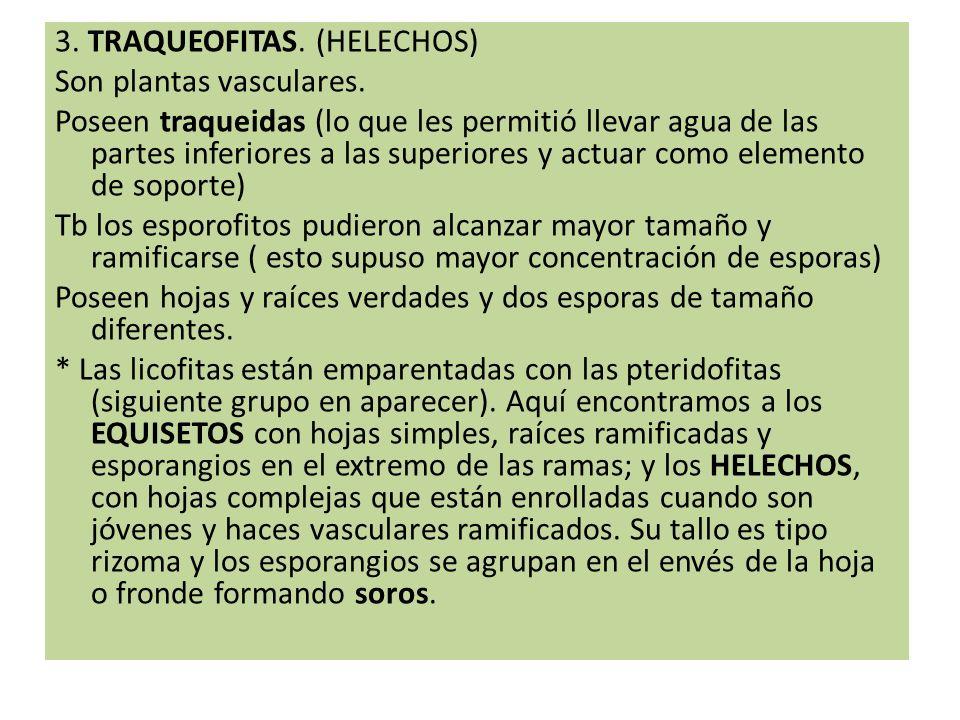 3.REINO ANIMALIA.