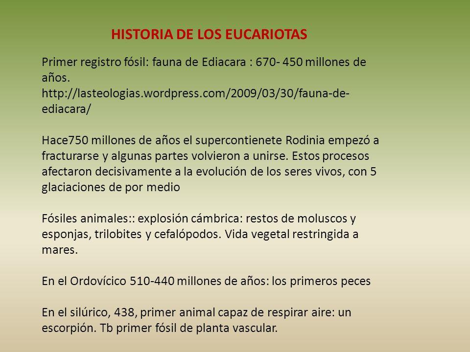 HISTORIA DE LOS EUCARIOTAS Primer registro fósil: fauna de Ediacara : 670- 450 millones de años. http://lasteologias.wordpress.com/2009/03/30/fauna-de