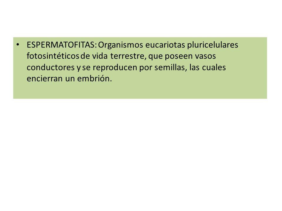 ESPERMATOFITAS: Organismos eucariotas pluricelulares fotosintéticos de vida terrestre, que poseen vasos conductores y se reproducen por semillas, las