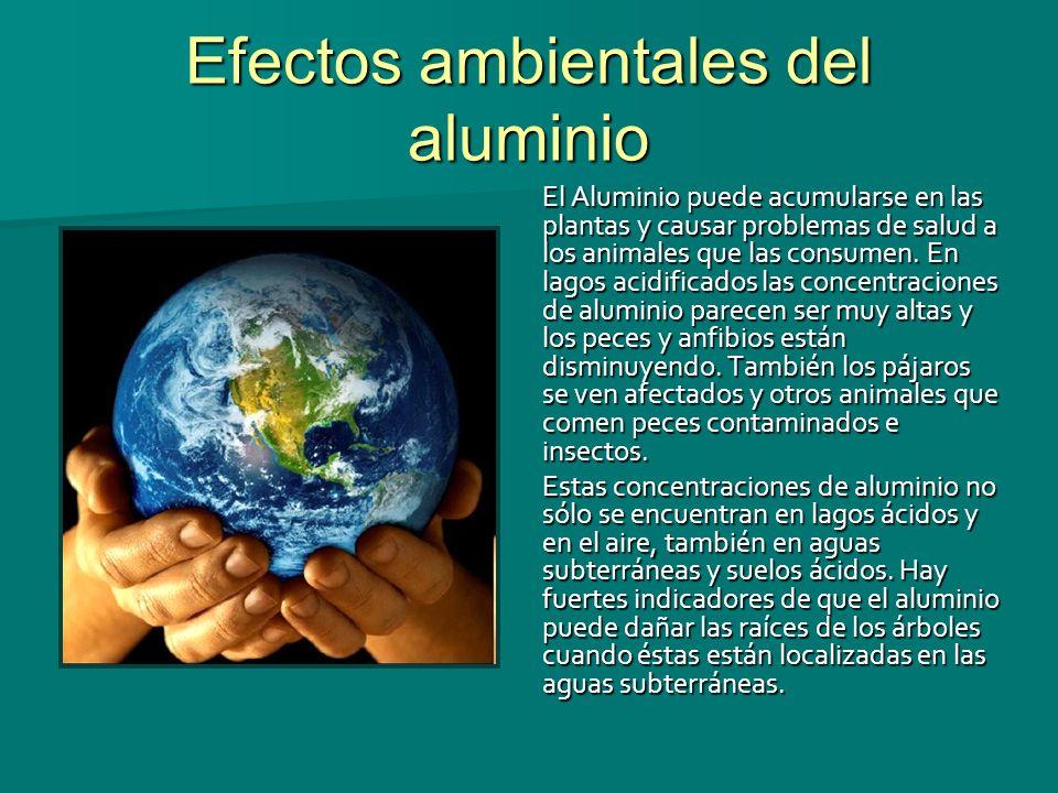 Efectos ambientales del aluminio El Aluminio puede acumularse en las plantas y causar problemas de salud a los animales que las consumen. En lagos aci