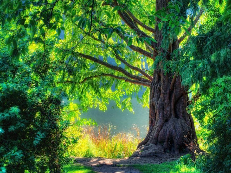 La meditación a aquella hora era libertad; era como entrar en un mundo desconocido de belleza y quietud; era un mundo sin imagen, símbolo o palabra, sin oleadas de recuerdo.