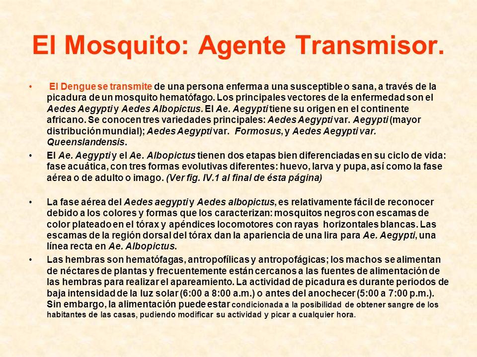 El Mosquito: Agente Transmisor. El Dengue se transmite de una persona enferma a una susceptible o sana, a través de la picadura de un mosquito hematóf