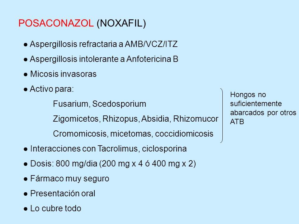 Aspergillosis refractaria a AMB/VCZ/ITZ Aspergillosis intolerante a Anfotericina B Micosis invasoras Activo para: Fusarium, Scedosporium Zigomicetos,