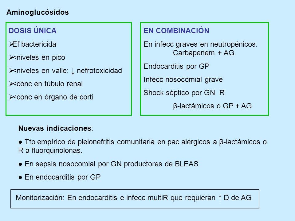 Aminoglucósidos DOSIS ÚNICA Ef bactericida <niveles en pico <niveles en valle: nefrotoxicidad <conc en túbulo renal <conc en órgano de corti EN COMBIN