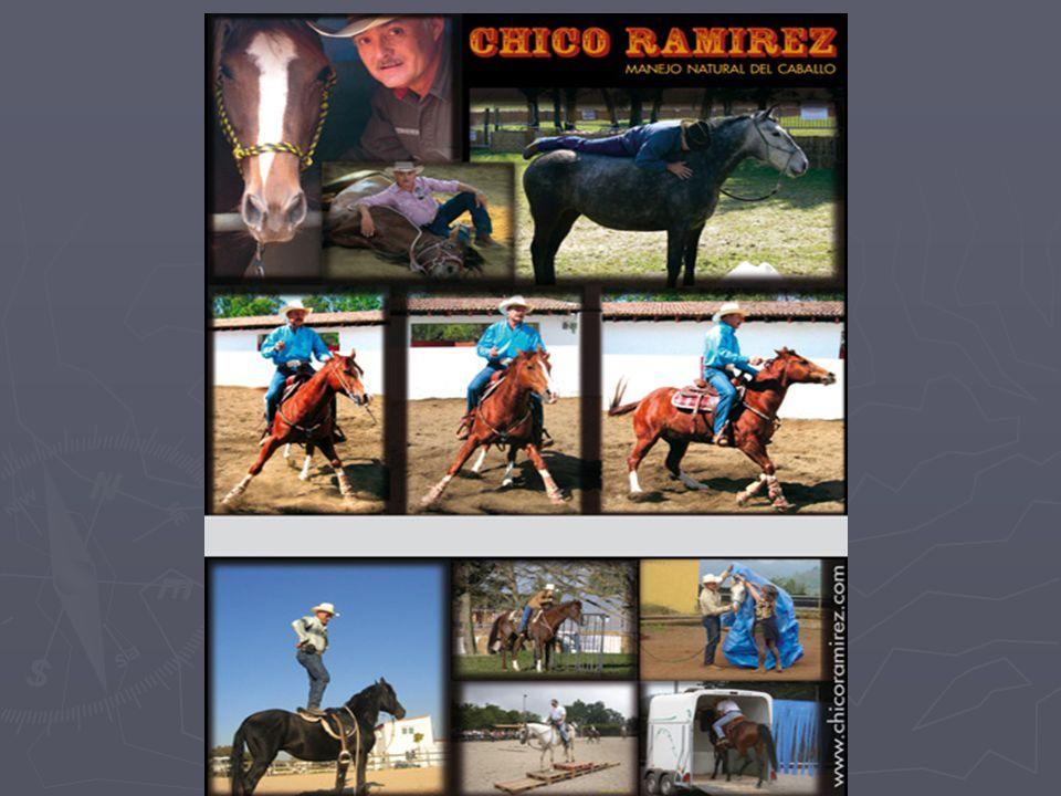 INFORMACIONES Mayores informaciones de disponibilidad y precios, visitar www.caballosdelalma.cl y/o contactarse con Agustín Montes S., al celular 93199882 y si es del extranjero a 56993199882.
