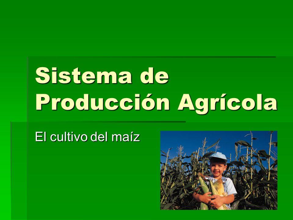 Sistema de Producción Agrícola El cultivo del maíz