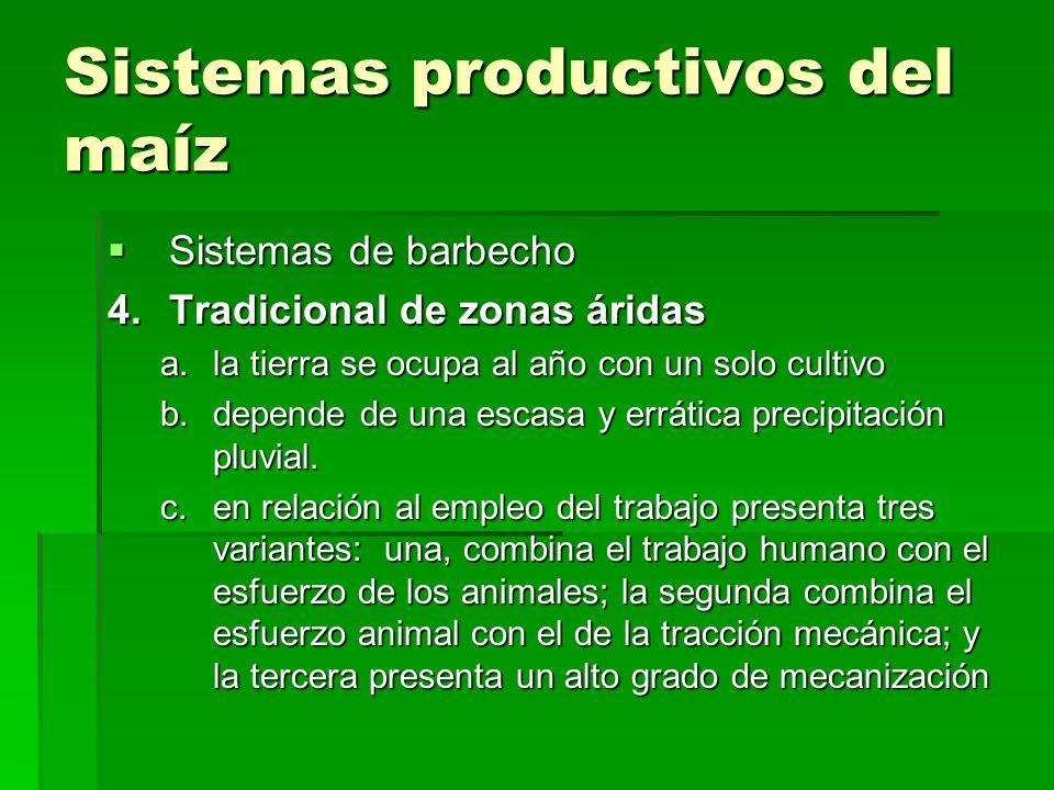 Sistemas productivos del maíz Sistemas de barbecho Sistemas de barbecho 4.Tradicional de zonas áridas a.la tierra se ocupa al año con un solo cultivo