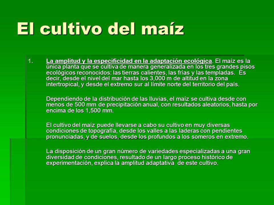 El cultivo del maíz 1.La amplitud y la especificidad en la adaptación ecológica. El maíz es la única planta que se cultiva de manera generalizada en l