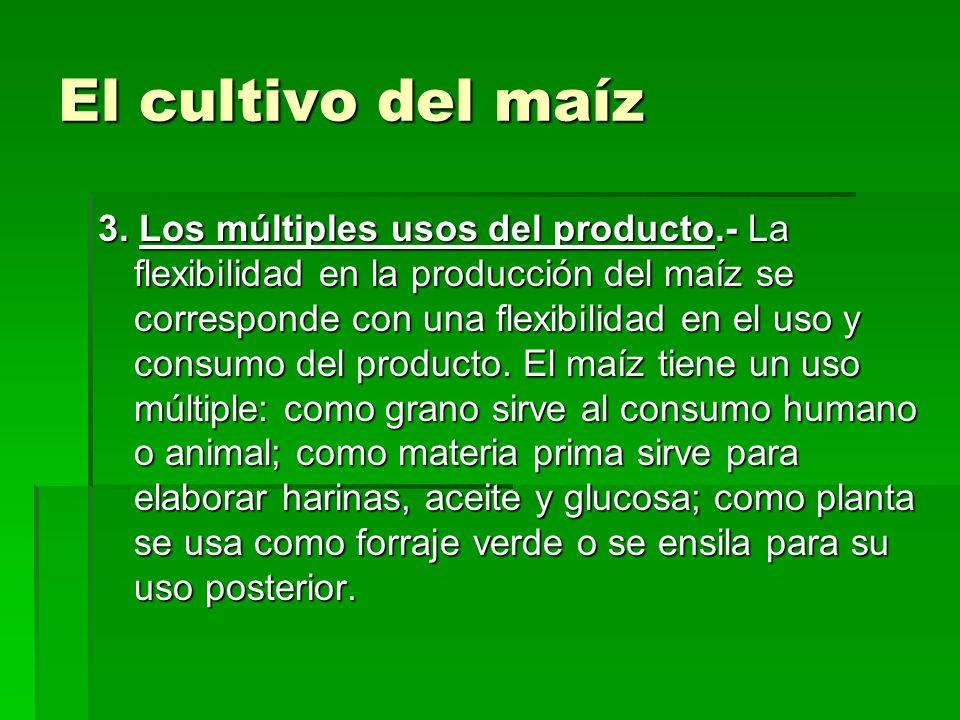 El cultivo del maíz 3. Los múltiples usos del producto.- La flexibilidad en la producción del maíz se corresponde con una flexibilidad en el uso y con