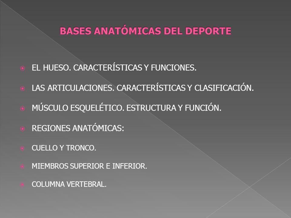 EL HUESO. CARACTERÍSTICAS Y FUNCIONES. LAS ARTICULACIONES. CARACTERÍSTICAS Y CLASIFICACIÓN. MÚSCULO ESQUELÉTICO. ESTRUCTURA Y FUNCIÓN. REGIONES ANATÓM