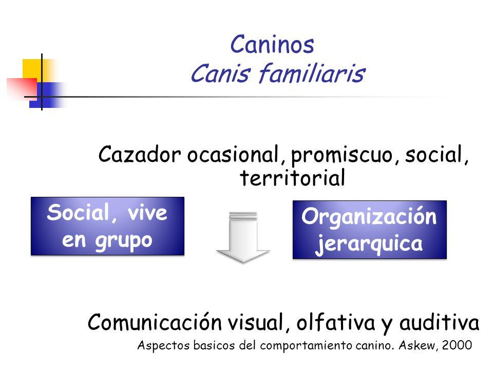Caninos Canis familiaris Cazador ocasional, promiscuo, social, territorial Comunicación visual, olfativa y auditiva Social, vive en grupo Aspectos bas