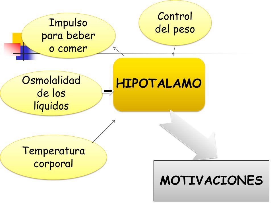 Necesidades comportamentales Necesidades que pueden ser evaluadas por su patrón de comportamiento HambreComer Nivel de glucosas Nivel de leptina