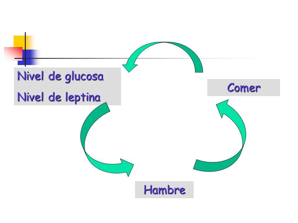 Hambre Comer Nivel de glucosa Nivel de leptina