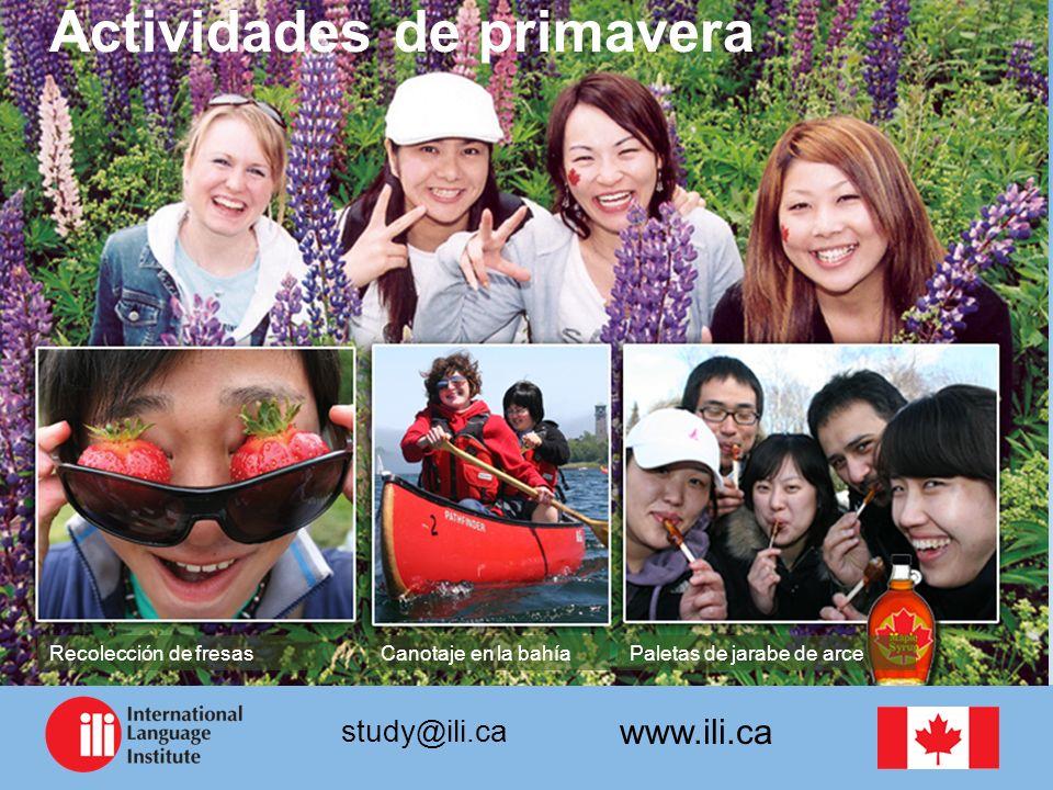 www.ili.ca study@ili.ca Actividades de primavera Paletas de jarabe de arceCanotaje en la bahíaRecolección de fresas