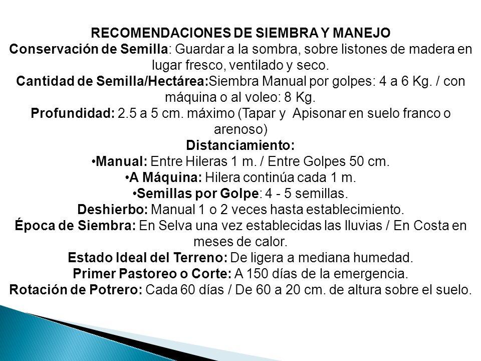 RECOMENDACIONES DE SIEMBRA Y MANEJO Conservación de Semilla: Guardar a la sombra, sobre listones de madera en lugar fresco, ventilado y seco. Cantidad