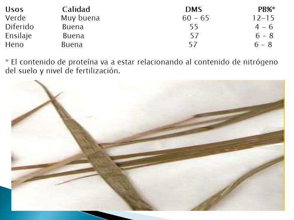 Usos Calidad DMS PB%* Verde Muy buena 60 - 65 12-15 Diferido Buena 55 4 - 6 Ensilaje Buena 57 6 - 8 Heno Buena 57 6 - 8 * El contenido de proteína va