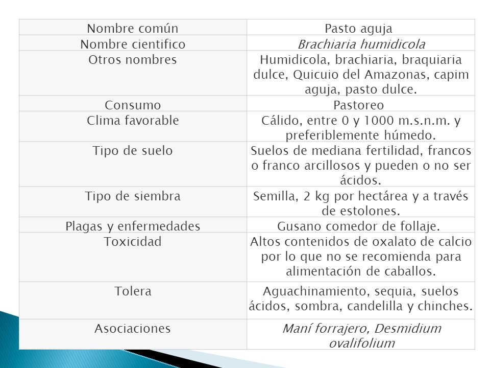 Nombre comúnPasto aguja Nombre cientificoBrachiaria humidicola Otros nombresHumidicola, brachiaria, braquiaria dulce, Quicuio del Amazonas, capim aguj