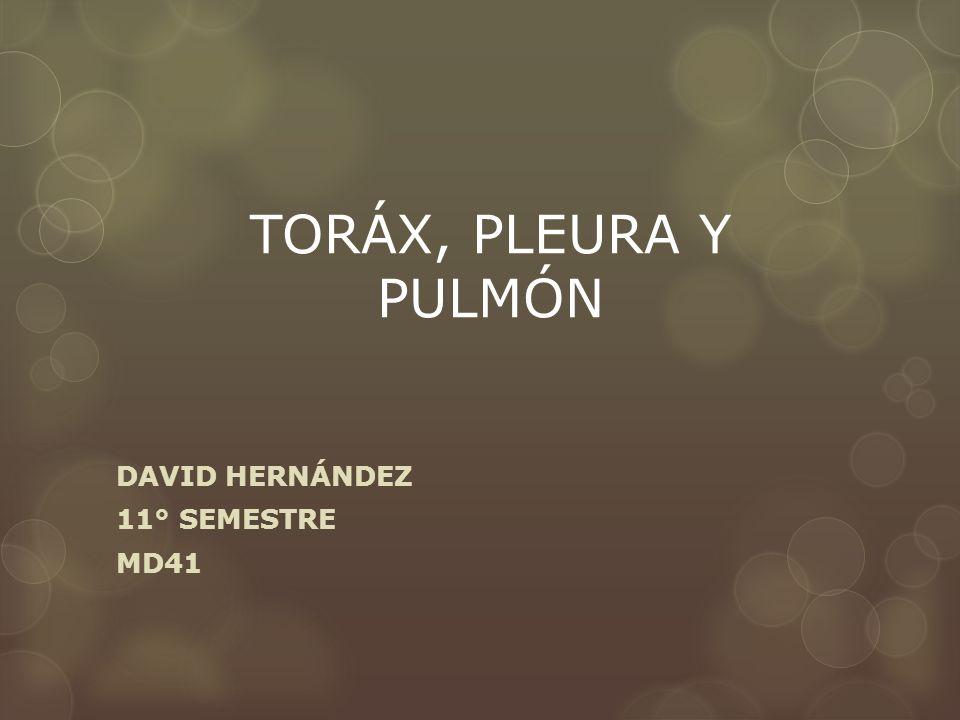 TORÁX, PLEURA Y PULMÓN DAVID HERNÁNDEZ 11° SEMESTRE MD41