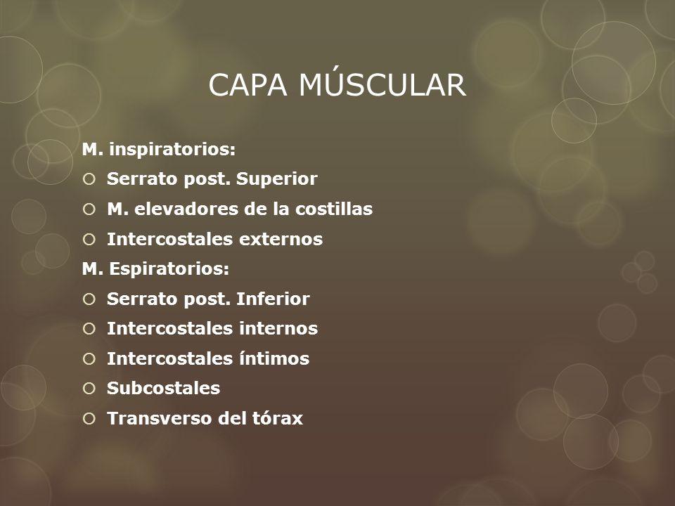 CAPA MÚSCULAR M. inspiratorios: Serrato post. Superior M. elevadores de la costillas Intercostales externos M. Espiratorios: Serrato post. Inferior In