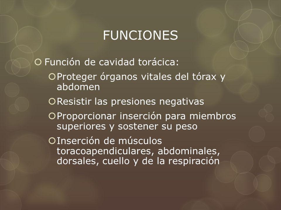 FUNCIONES Función de cavidad torácica: Proteger órganos vitales del tórax y abdomen Resistir las presiones negativas Proporcionar inserción para miemb