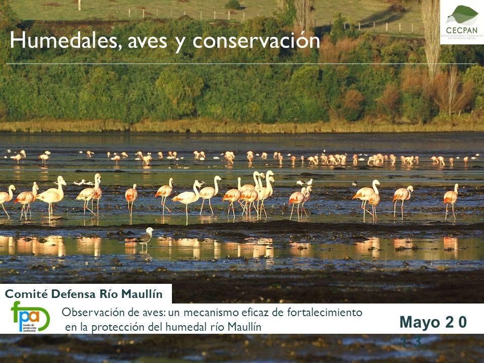 Comité Defensa Río Maullín Mayo 2 0 1 3 Humedales, aves y conservación Observación de aves: un mecanismo eficaz de fortalecimiento en la protección de
