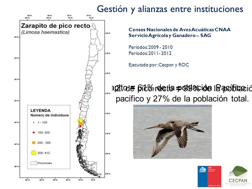 Zarapito = 61% de la población Pacífico Z. de pico recto = 99% de la población pacifico y 27% de la población total. Censos Nacionales de Aves Acuátic