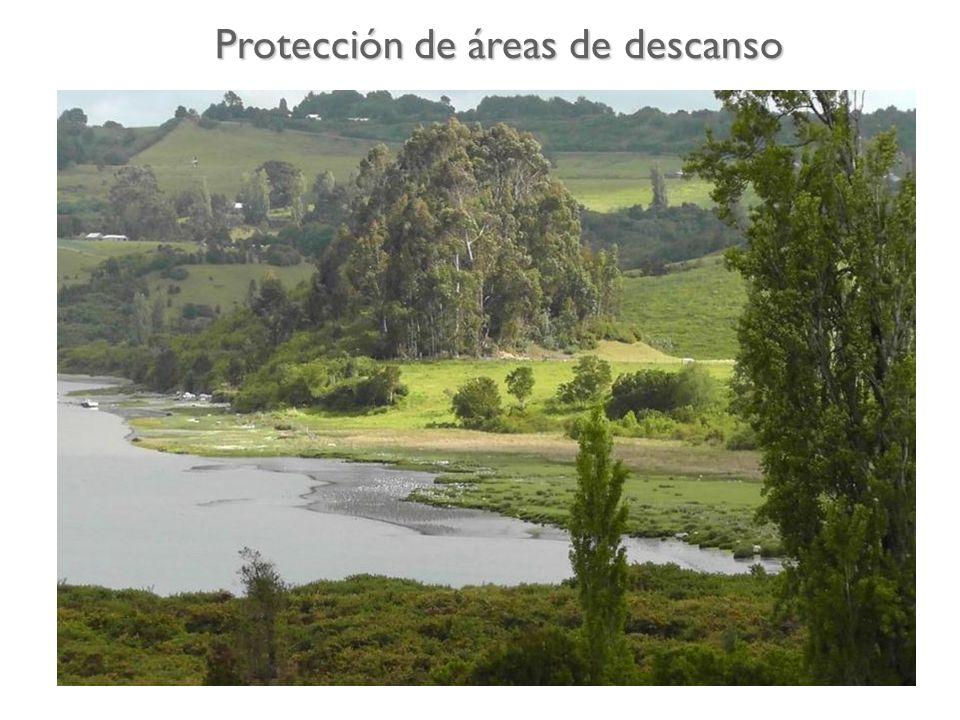 Humedal de Pullao, Comuna de Castro. Protección de áreas de descanso
