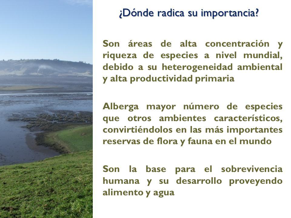 Son áreas de alta concentración y riqueza de especies a nivel mundial, debido a su heterogeneidad ambiental y alta productividad primaria Alberga mayo
