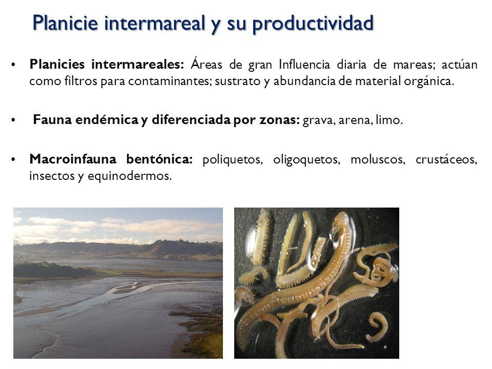 Planicies intermareales: Áreas de gran Influencia diaria de mareas; actúan como filtros para contaminantes; sustrato y abundancia de material orgánica