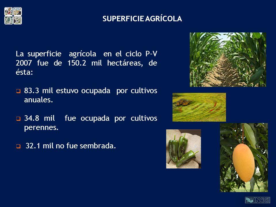 La superficie agrícola en el ciclo P-V 2007 fue de 150.2 mil hectáreas, de ésta: 83.3 mil estuvo ocupada por cultivos anuales. 34.8 mil fue ocupada po