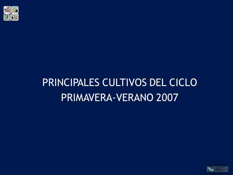 PRINCIPALES CULTIVOS DEL CICLO PRIMAVERA-VERANO 2007