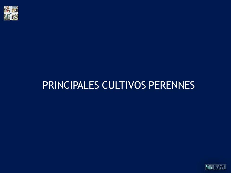 PRINCIPALES CULTIVOS PERENNES