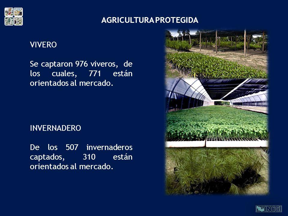 VIVERO Se captaron 976 viveros, de los cuales, 771 están orientados al mercado. INVERNADERO De los 507 invernaderos captados, 310 están orientados al