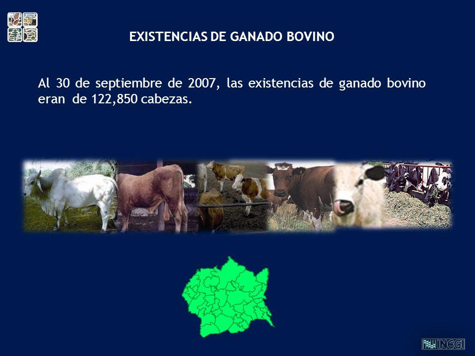 Al 30 de septiembre de 2007, las existencias de ganado bovino eran de 122,850 cabezas. EXISTENCIAS DE GANADO BOVINO