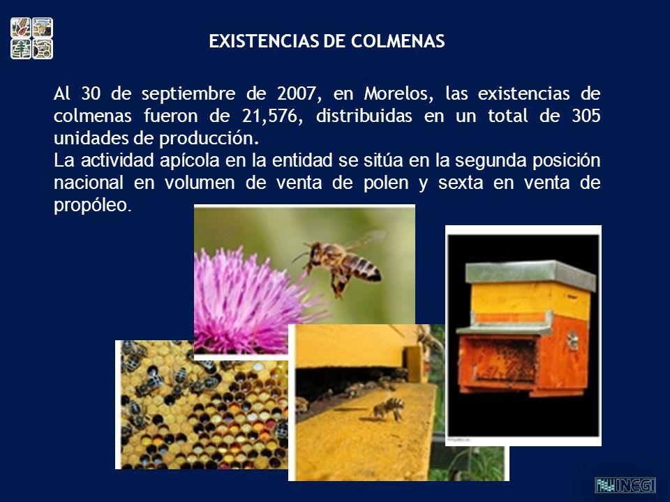 Al 30 de septiembre de 2007, en Morelos, las existencias de colmenas fueron de 21,576, distribuidas en un total de 305 unidades de producción. La acti