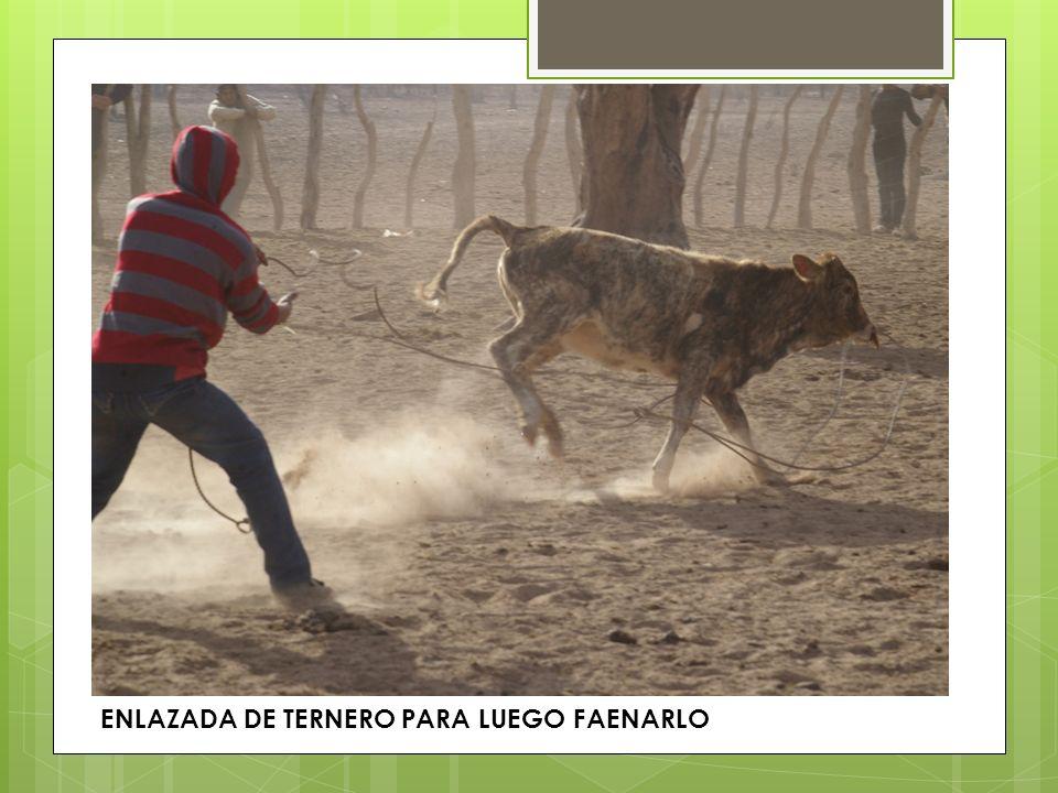 CORRAL DE OVEJAS EN EL BOLSON DE PIPANACO